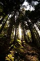Camminando nel bosco.jpg