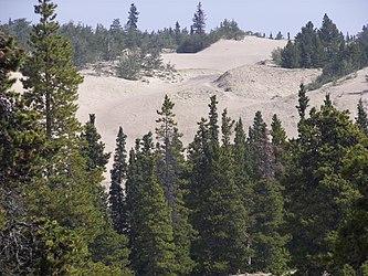 Carcross Desert 2009 4.jpg
