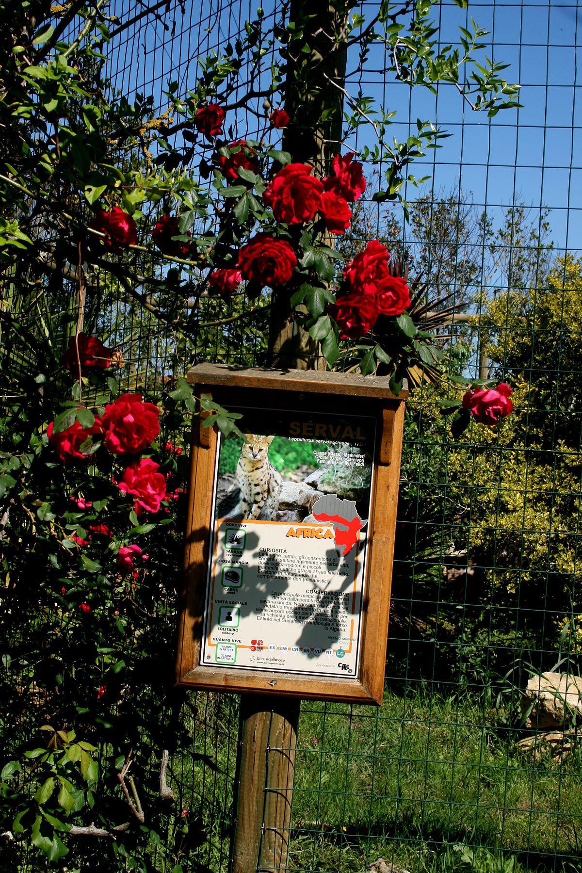 Parco gallorose wikipedia for Una storia ospita vicino a me