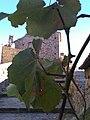 Castello Colobrarrese.jpg