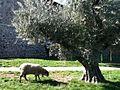 Castello di Amorosa - panoramio - JanSolo (3).jpg