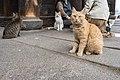 Cat's passage, Onomichi City; November 2018 (06).jpg