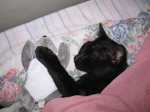 Cat black 827216
