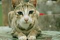 Cat public domain dedication image 0011.jpg