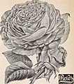 Catalogue 1894 - everything for the fruit grower (1894) (20583575251).jpg