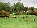 Cattle north of Skidby - geograph.org.uk - 233565.jpg