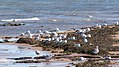 Cavendish Beach, Prince Edward Island (471068) (9450651640).jpg