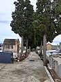 Cementiri d'Alcover 06.jpg