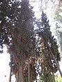 Cemetery of Kibutz Yagur IMG 2940.JPG