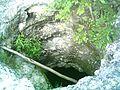 Cenote de Sierra Papacal, Yucatán (03).JPG