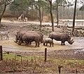 Ceratotherium simum - White Rhino1 BZ ies.jpg