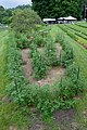 Cherry Tomato Maze (3686089310).jpg