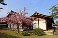 Cherry blossoms - Hōryū-ji - Ikaruga, Nara, Japan - DSC07591.jpg