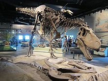 Daspletosaurus - Wikipedia, the free encyclopedia