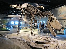 Chicago Field Museum - Daspletosaurus.jpg