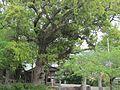 Chikozu-kashima.jpg