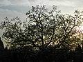 Chittorgarh sunset 01.jpg