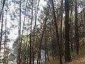 Chobar forest.jpg