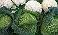 Choux verts et choux -fleurs au marché.jpg