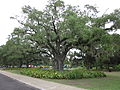 City Park NOLA June 2011 Oak and Playground.JPG