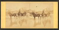 Coach on beach, and houses in the distance, from Robert N. Dennis collection of stereoscopic views.png