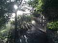 Coit tower sprinklers - panoramio.jpg