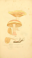 Coloured Figures of English Fungi or Mushrooms - t. 102.png