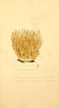 Coloured Figures of English Fungi or Mushrooms - t. 157.png