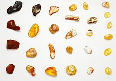 Colours of Baltic Amber.jpg