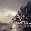 Consuelo Macabebe Beach Sunset.jpg