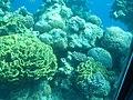 Coral World Underwater Observatory 22.jpg