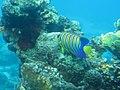 Coral World Underwater Observatory 46.jpg