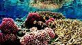Coral reef 09.jpg