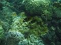 Coral reef 100.jpg