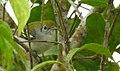 Costa Rica DSCN2669-new (31129935905).jpg