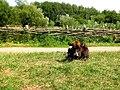 Cow (25025459).jpeg