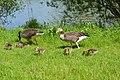 Craigavon Lakes - panoramio (13).jpg