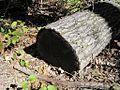 Craighead Forest Park 2011-10-02 Jonesboro AR 001.jpg