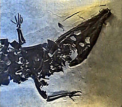 Borealosuchus wilsoni, Green River Formation, Fossil Butte National Monument