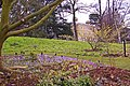 Crocus bed, Kew Gardens, Surrey - geograph.org.uk - 1186132.jpg