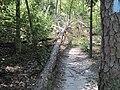 Crowleys Ridge State Park Dancing Rabbit Trail Paragould AR 04.jpg