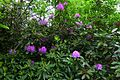 Crowthorne Forest (5740622838).jpg