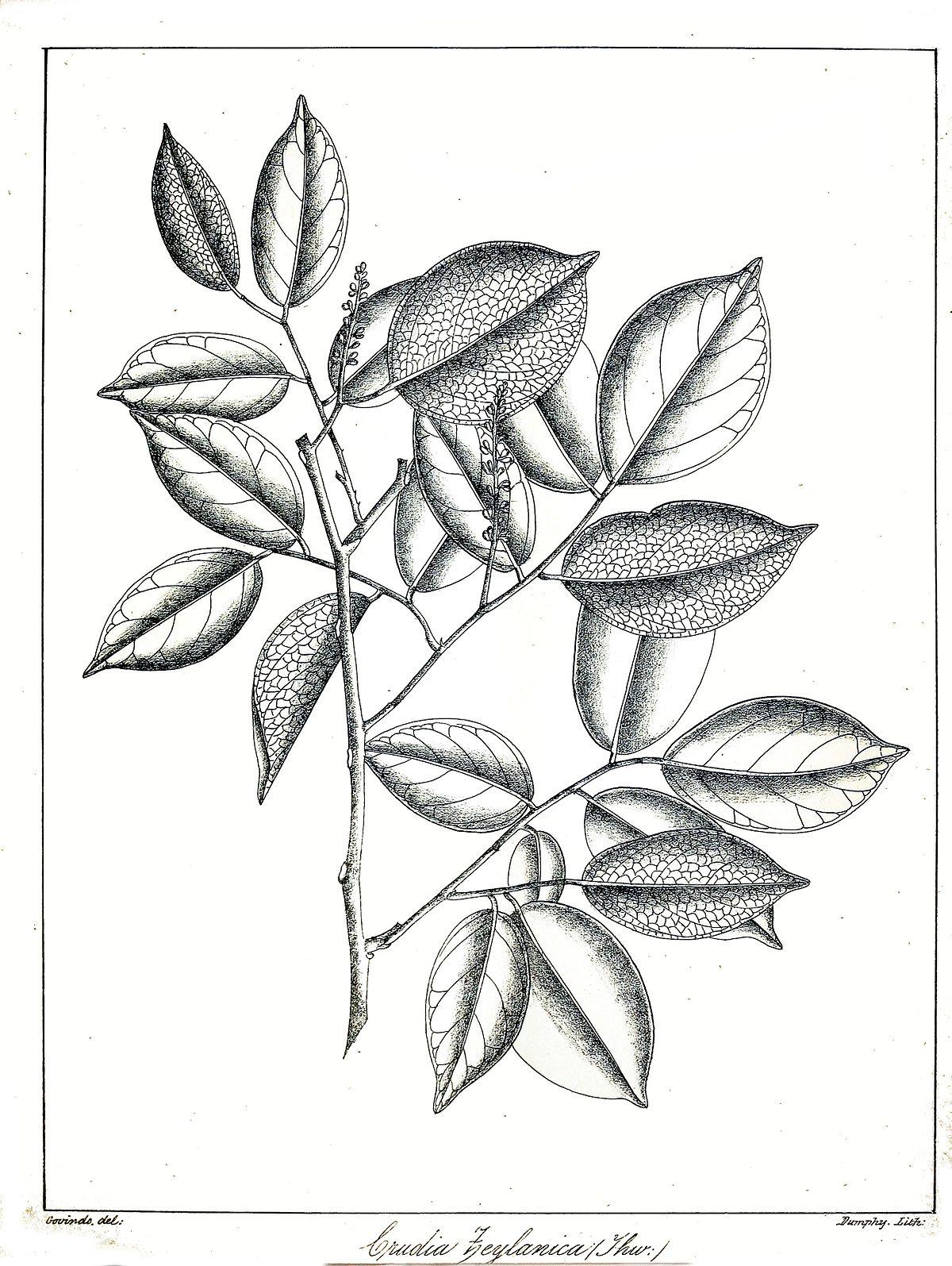 Extinct Plants List