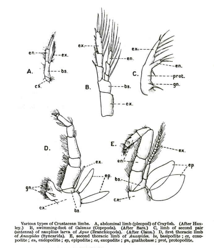CrustaceaAppendages