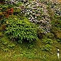 Cuneta en flor (1360442075).jpg