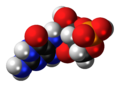 Cyclic pyranopterin monophosphate molecule spacefill.png