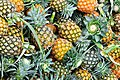 D85 0034 สับปะรด Pine Apple in Thailand Photographed by Trisorn Triboon.jpg