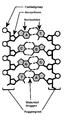 DNA structuur1.png