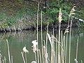 DSC02286 Teich zur Aufzucht autochthoner Fischarten ,,,.jpg