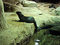 DSC26502, Monterey Bay Aquarium, California, USA (8410270734).jpg